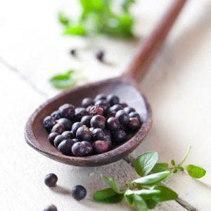 juniper berries tea