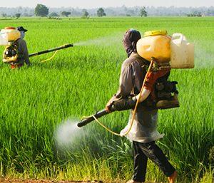 Monsanto Weed Killer