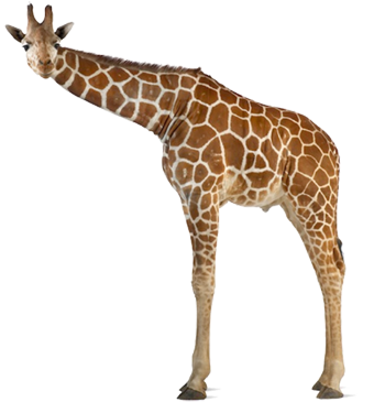 A Skiny Giraffe Looking at You, Fatty!