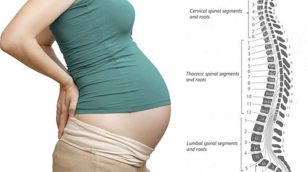 spinal segments during pregnancy